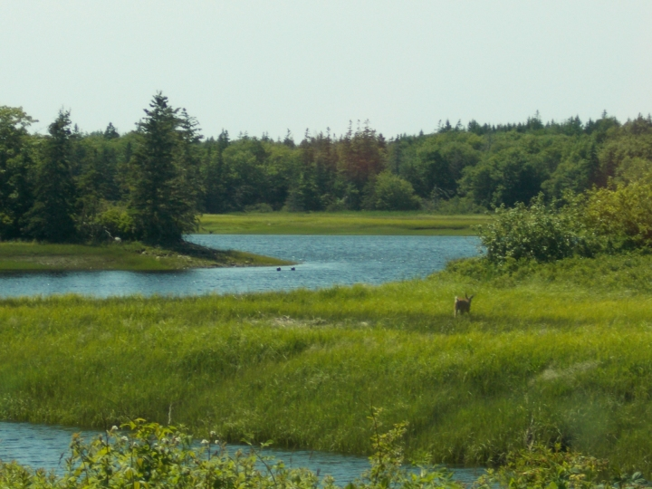 The many inlets of the Tusket peninsula.