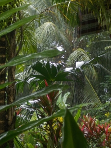 From my porch I get to watch the rain on the jungle  leaves.