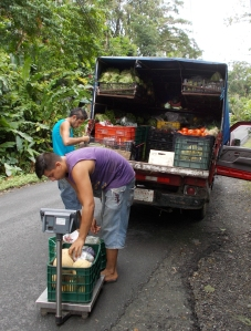 Fruit and vegetable truck making delivery to Selvins' restaurant Punta Uva